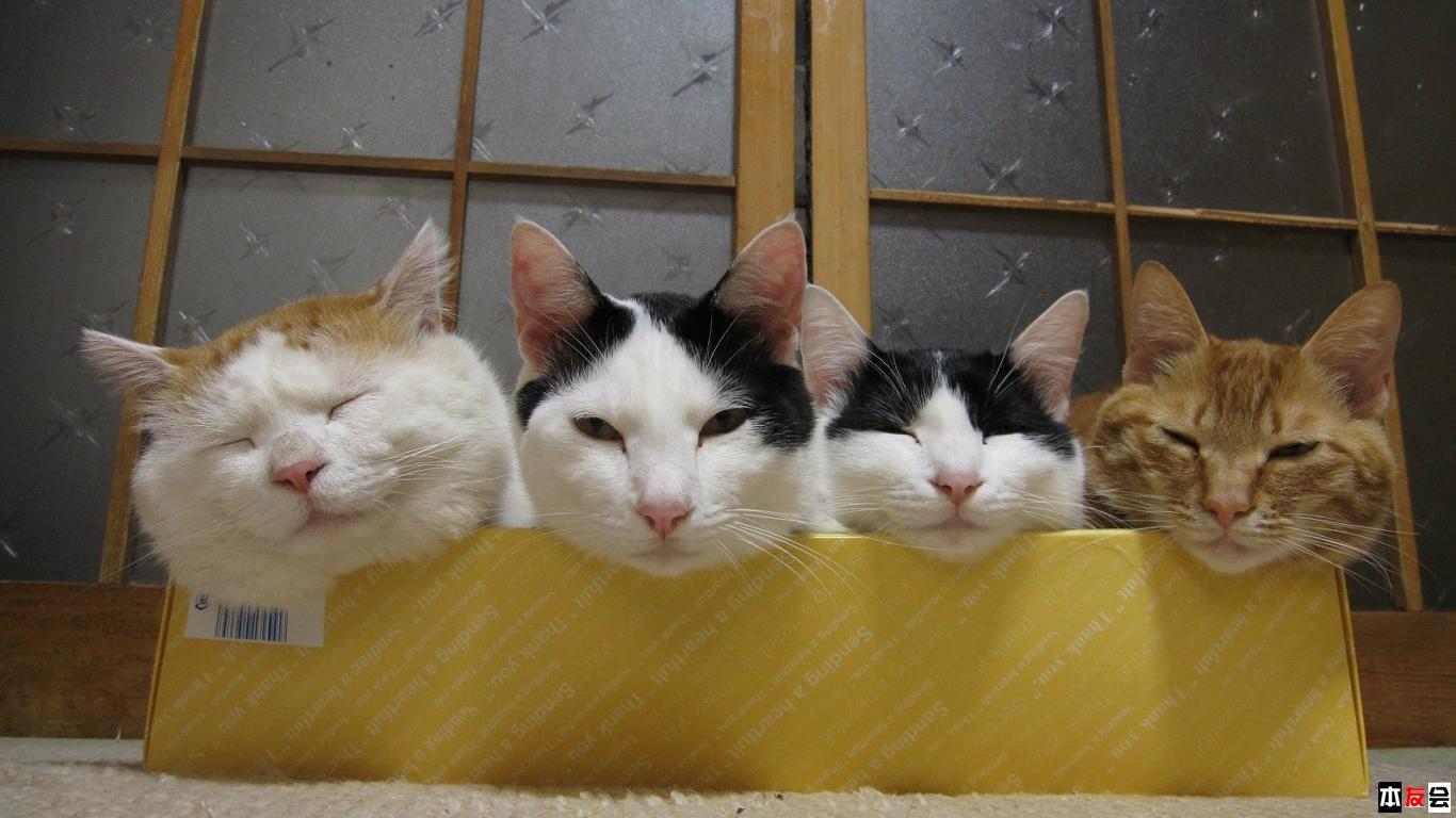 壁纸 动物 狗 狗狗 猫 猫咪 小猫 桌面 1366_768