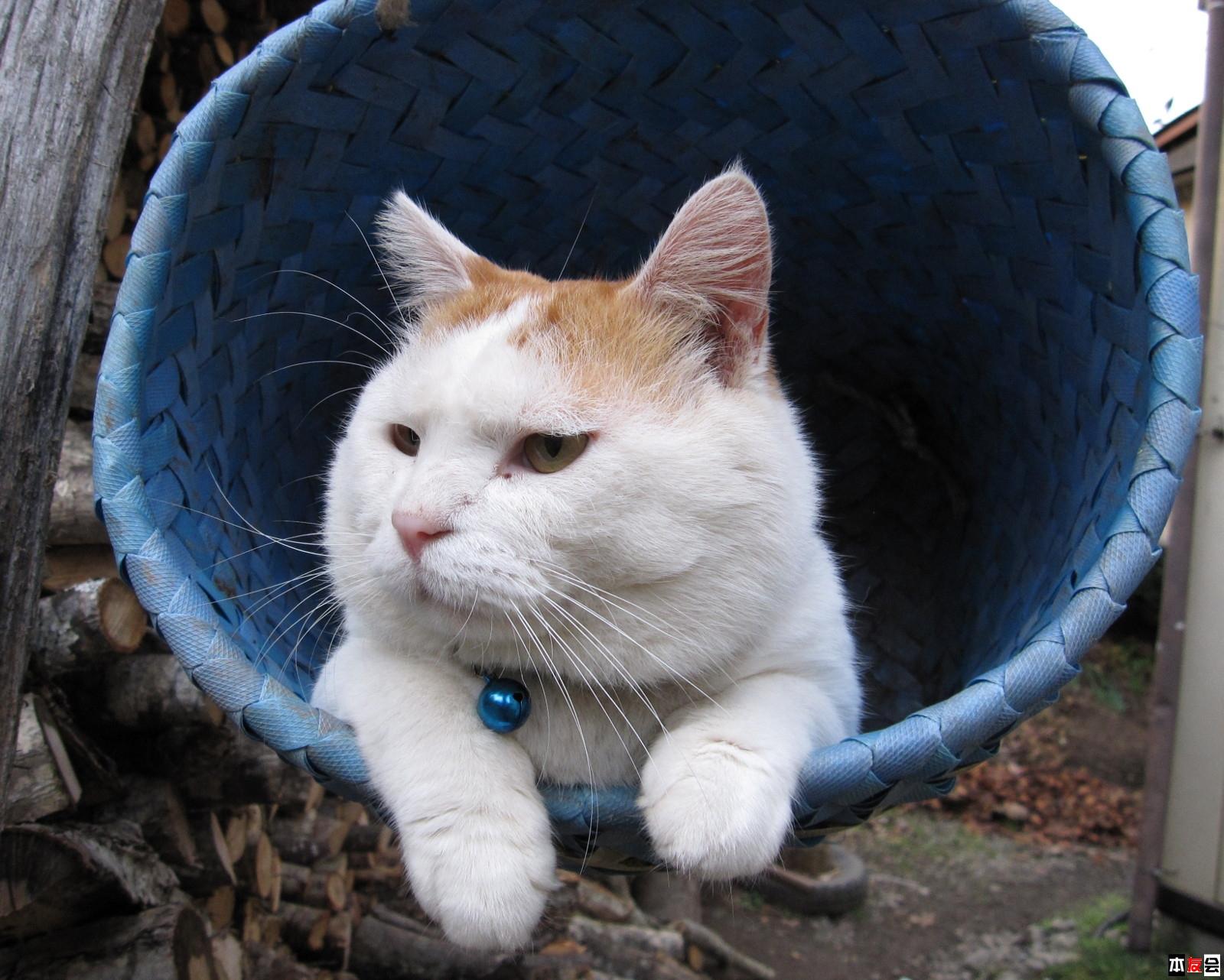14寸本本1366*768猫叔壁纸