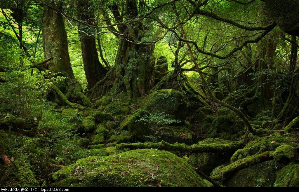 壁纸 风景 森林 桌面 1024_658图片