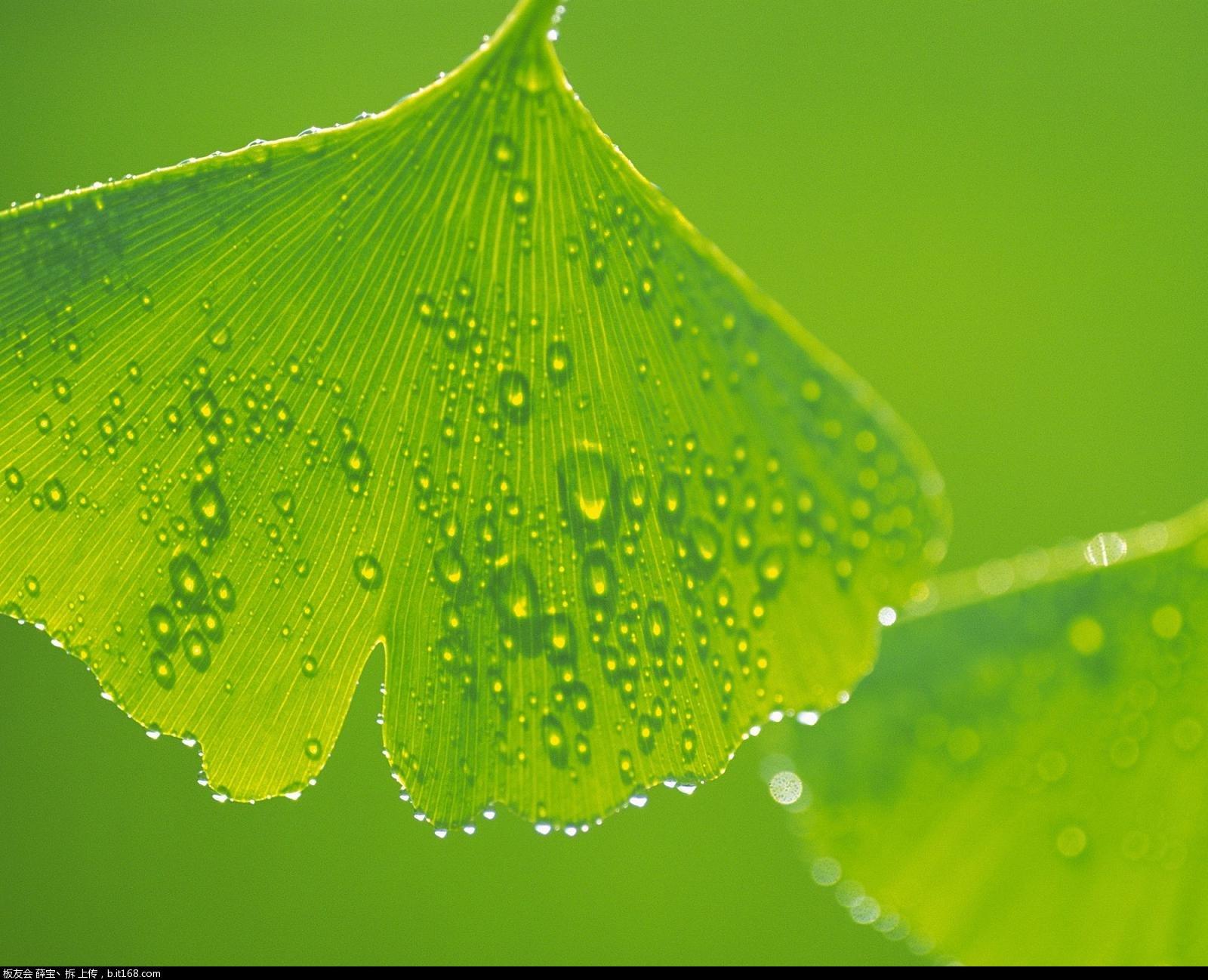 背景 壁纸 绿色 绿叶 树叶 植物 桌面 1600_1298