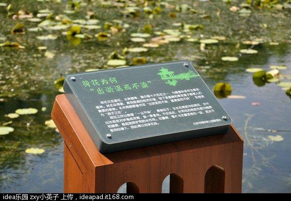 陶然亭公园12.jpg