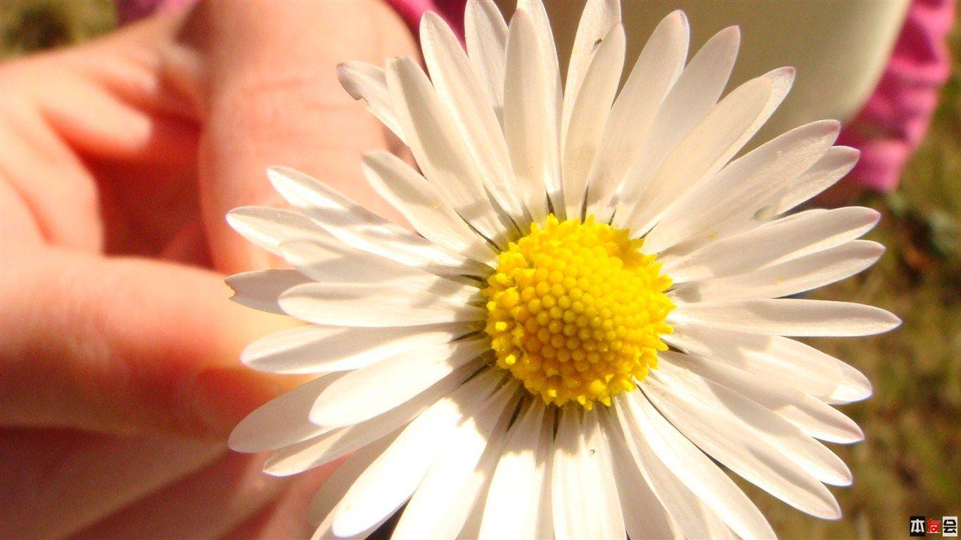 flower_by_greenDK.jpg