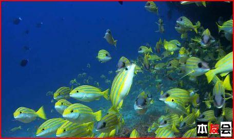 壁纸 海底 海底世界 海洋馆 水族馆 456_271
